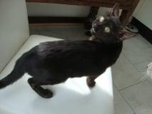 Black Pearl1